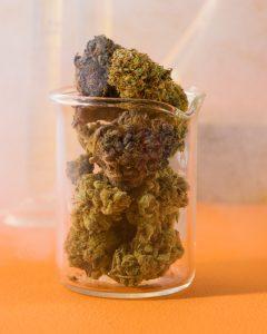 cannabis-4