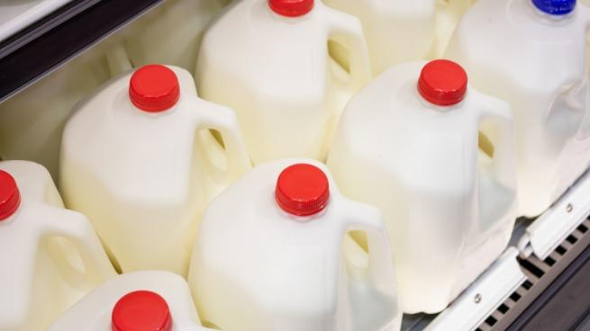 Several gallon jugs of milk for sale at the local grocery store