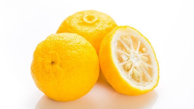 Japanese citron Yuzu citrus fruits isolated on white background
