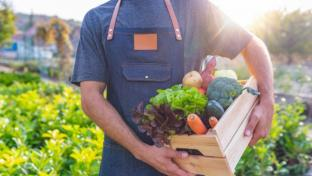 Man Farmer Holding Fresh Ripe Vegetables in Wooden Box in Garden DayLight Healthy Life Autumn Spring Harvest Concept Copy Space.